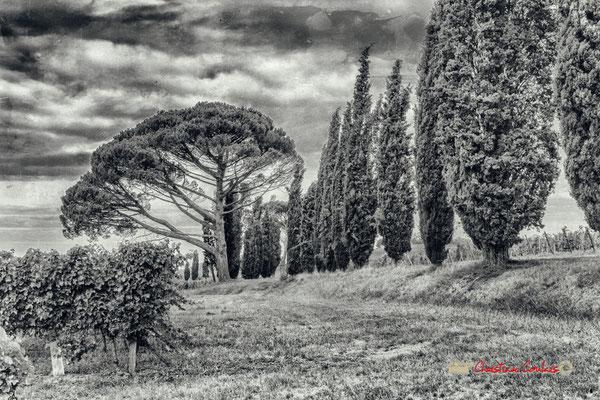 Vignoble et une partie des 130 cyprés ponctués de pins parasols plantés en 1937 par François Mauriac au Domaine de Malagar. Centre François Mauriac, Saint-Maixant. 28/09/2019 Reproduction interdite - Tous droits réservés © Christian Coulais