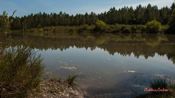 3/3 La grande gravière. Forêt de Migelan, espace naturel sensible, Martillac / Saucats / la Brède. Vendredi 22 mai 2020. Photographie : Christian Coulais