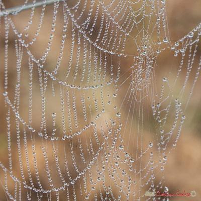 """Perles de brouillard"". Vitis vinifera Land Art"