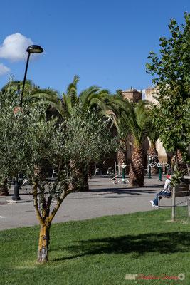 Olivier, palmiers, et jeux de remise en forme. Paseo Cantolagua, Sangüesa, Navarra