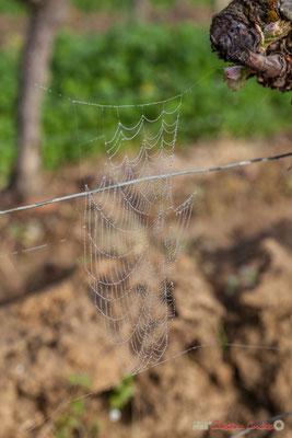 """""""Et toile, étoile"""". Vitis vinifera Land Art"""