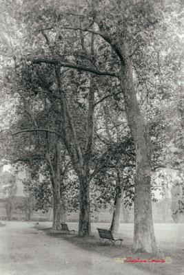 Allée aux platanes, Domaine de Malagar. Centre François Mauriac, Saint-Maixant. 28/09/2019 Reproduction interdite - Tous droits réservés © Christian Coulais