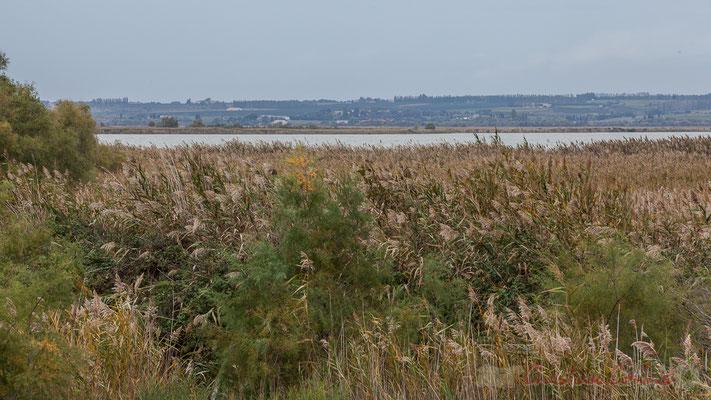 L'étang est situé sur les deux communes de Saint-Gilles et de Vauvert, au cœur de la Petite Camargue. Les hameaux de Franquevaux et de Gallician en sont limitrophes.