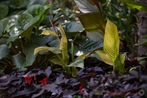 Le jardin sauvage; Ewa Quiroga Carjaval, Gwen Machera, Ben Skelley, Zoe-Marie Walker, étudiants; Jamie Liversedge, enseignant; Université de Greenwich; Grande-Bretagne