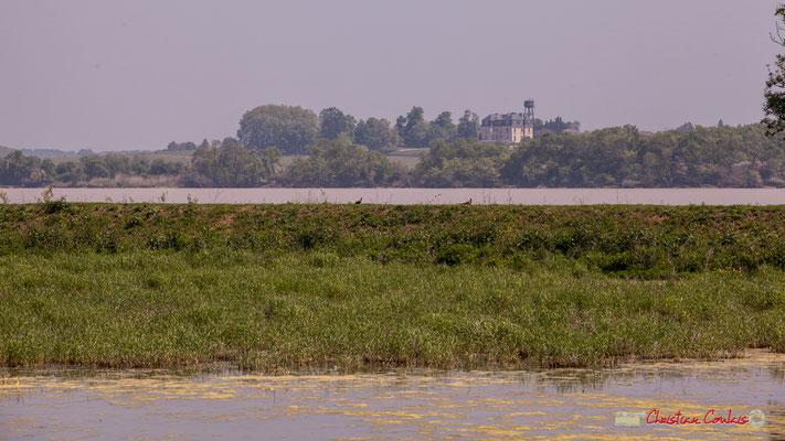 Un couple de faisans se promène sur la digue Est. Visite de l'Île Nouvelle, Gironde. 06/05/2018
