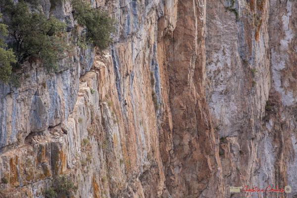 5/9 Vautour fauve en vol d'approche de son nid / Buitre beonado que se acerca al nido, Foz de Arbaiun, Navarra