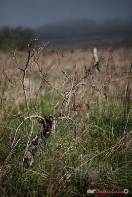 """Abandon de poste 2"". Vitis vinifera Land Art"