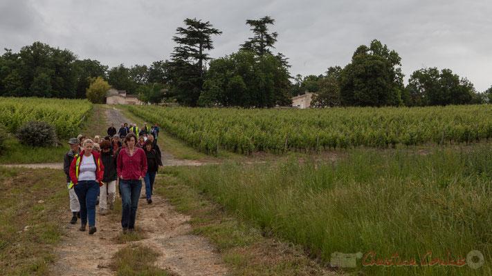 Vignoble du Château Duplessy, Cénac. Randonnée pédestre Jazz360 2016, de Cénac à Quinsac