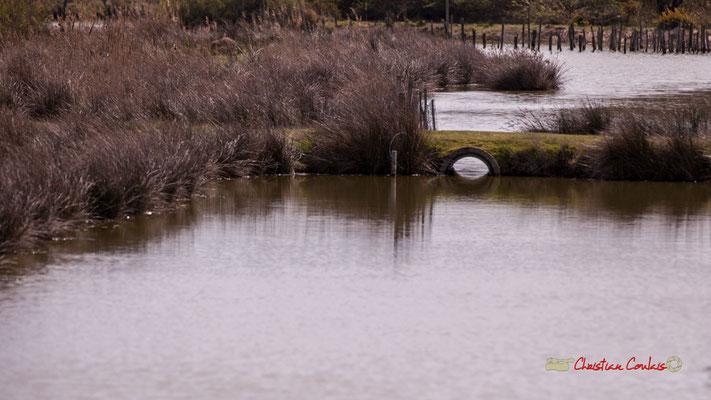 Réserve ornithologique du Teich. Samedi 16 mars 2019