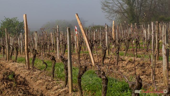 Complantage et piquetage à venir. Vignobles du Château du Garde, Cénac. 3 avril 2017
