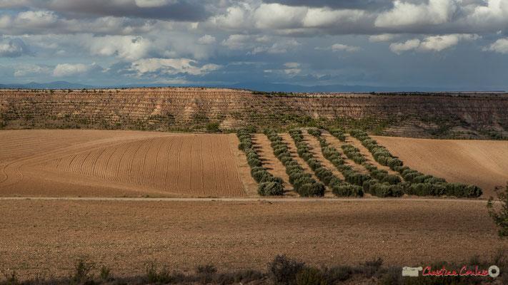 Travail du sol et champs d'oliviers / Labranza y olivares, Parque natural de las Bardenas Reales, Navarra