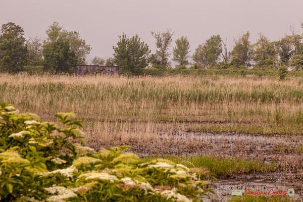 L'observatoire du parcours de découverte de la roselière de l'Île Nouvelle, Gironde. 06/05/2018