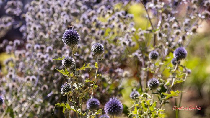 Le jardin Moray. Marie PREUX, architecte paysagiste, et Florent KOUASSI, étudiant en architecture du paysage. Domaine de Chaumont-sur-Loire. Lundi 13 juillet 2020. Photographie © Christian Coulais
