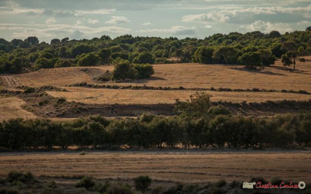Céréales et fôrets / Cereales y bosques, Parque natural de las Bardenas Reales, Navarra