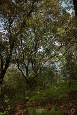 Au fil du chemin la vue sur l'étang de Cousseau se précise...