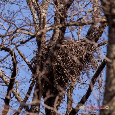 Nid. Réserve ornithologique du Teich. Samedi 16 mars 2019