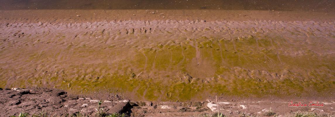 """""""Cyanobactéries"""" La Garonne à Langoiran. Samedi 24 avril 2021. Photographie © Christian Coulais"""