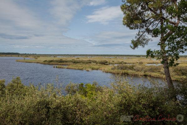 Après la dune ancienne, l'étang de Cousseau, puis son marais...