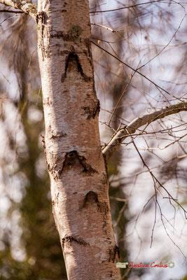 Tronc II, réserve ornithologique du Teich. Samedi 16 mars 2019. Photographie © Christian Coulais