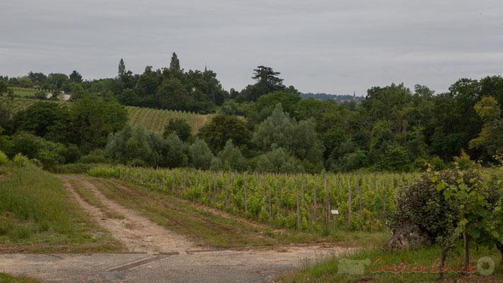 Vignoble du Château Duplessy, Cénac. Randonnée pédestre Jazz360 2016, de Cénac à Quinsac, 12/06/2016