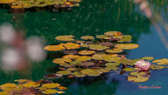 """""""Grenouilles et nénuphars sur eau bleu canard"""" Domaine de Chaumont-sur-Loire, Loir-et-Cher, Région Centre-Val-de-Loire. Lundi 13 juillet 2020. Photographie © Christian Coulais"""
