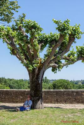 Annie Robert sous l'arbre à sieste; Soul Jazz Rebels. Festival JAZZ360, 10 juin 2017, Camblanes-et-Meynac
