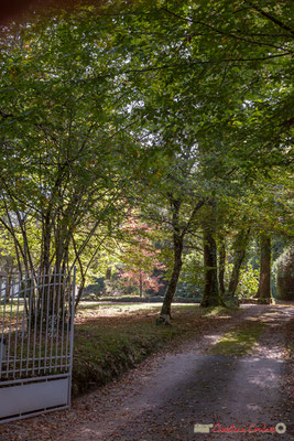 Très belle clairière habitée. Avenue du Rauzé, Cénac, Gironde. 16/10/2017