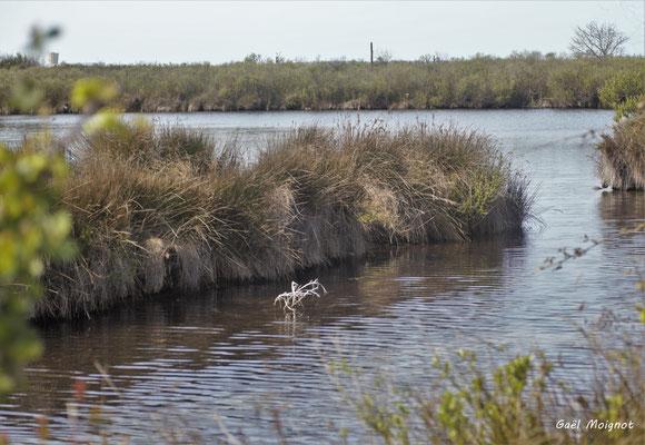 Réserve ornithologique du Teich. Photographie Gaël Moignot. Samedi 16 mars 2019