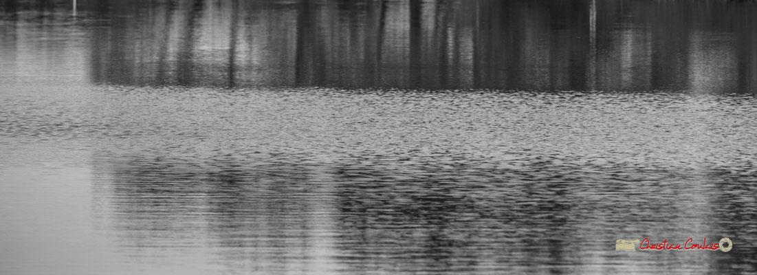 Water art II. Réserve ornithologique du Teich. Samedi 16 mars 2019. Photographie © Christian Coulais