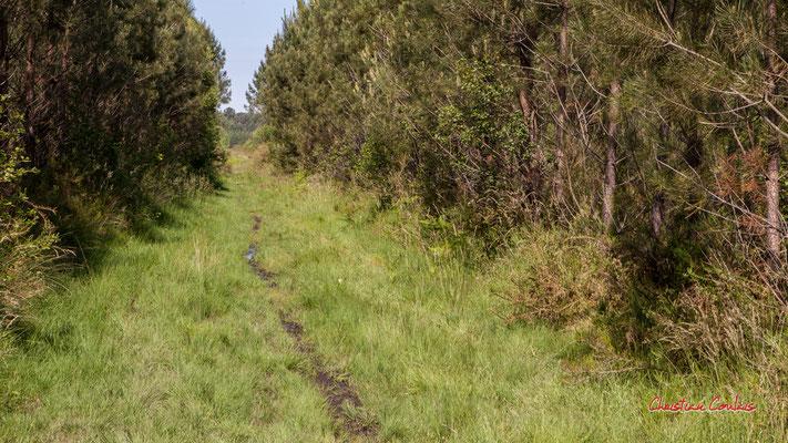 1/3 Pare-feu entre deux parcelles. Forêt de Migelan, espace naturel sensible, Martillac / Saucats / la Brède. Vendredi 22 mai 2020. Photographie : Christian Coulais
