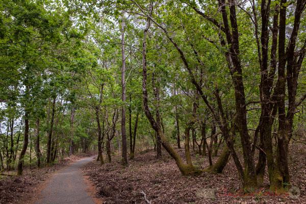 Vélodyssée, piste cyclable internationale. Forêt de Lège-Cap Ferret, Gironde, Aquitaine