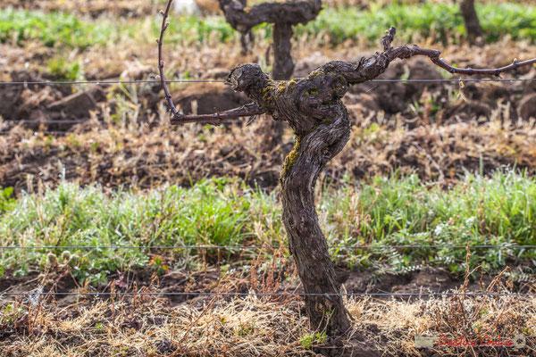 """""""Le joueur de pétanque"""". Vitis vinifera Land Art"""