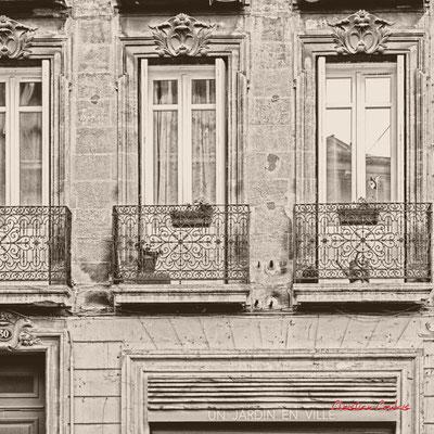 """""""Un jardin en ville...et au balcon"""" Quartier Saint-Michel, Bordeaux. Mercredi 24 juin 2020. Photographie © Christian Coulais"""