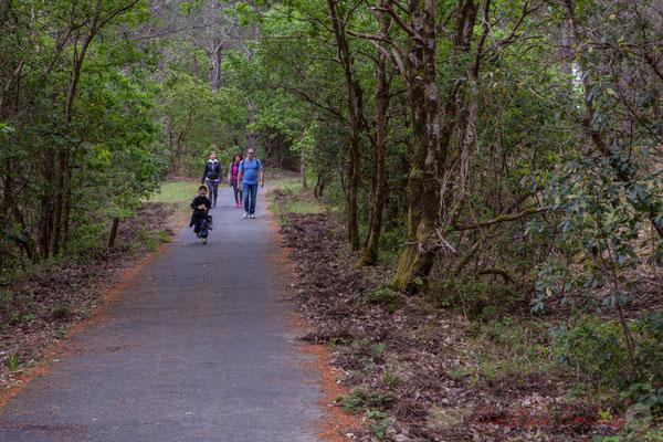 Piste cyclable (50km disponible d'est en ouest et du nord au sud de la presqu'île). Forêt de Lège-Cap Ferret, Gironde, Aquitaine