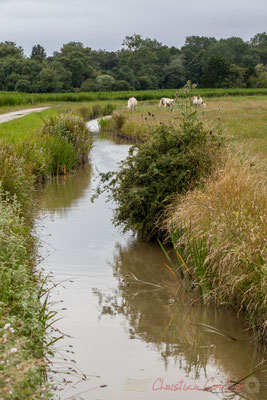 Entre marais doux et marais salés, circuit N°27, Pays de Saint-Gilles-Croix-de-Vie, Vendée, Pays de la Loire