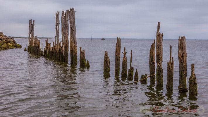 """""""Sea art"""". Port ostréicole d'Arès, par le sentier de la Réserve naturelle des Prés salés"""