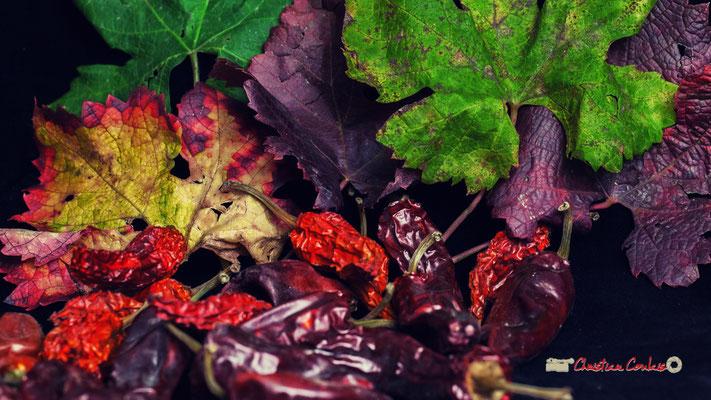 Nature morte végétale, Atelier Photo Numérique de l'AMAC. 09/11/2019 Photographie © Christian Coulais