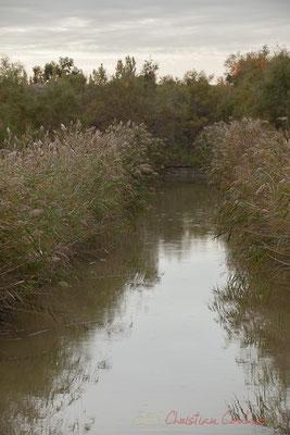 La Camargue gardoise, maillage complexe de cours d'eau, souvent artificialisés, de canaux de navigation, d'irrigation, de drainage. Réserve naturelle régionale de Scamandre, Vauvert