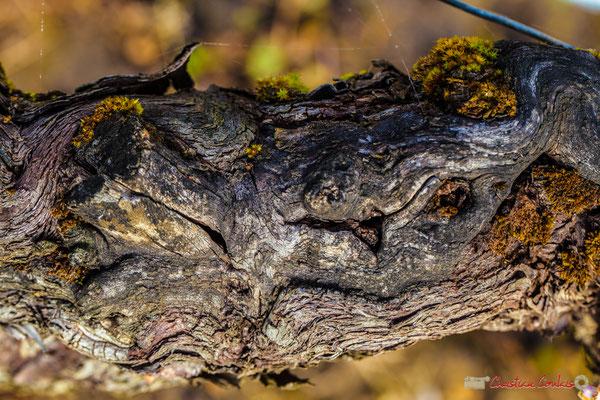 Vitis vinifera Land Art