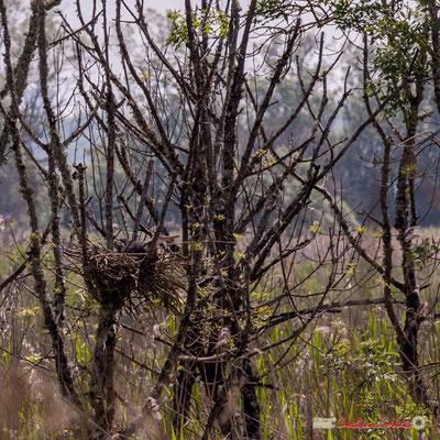 Oiseau dans son nid. Visite de l'Île Nouvelle. 06/05/2018