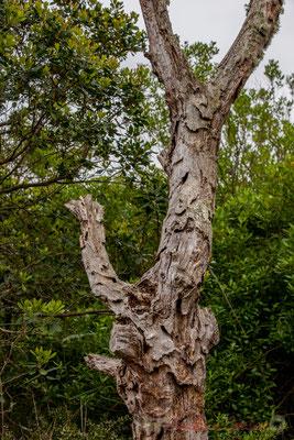 Nature morte III. De Lège-Cap Ferret à Arès, par le sentier de la Réserve naturelle des Prés salés
