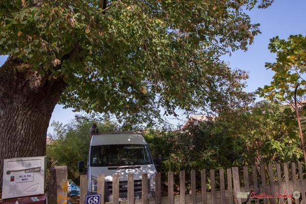 1 Très beau chêne, roche d'un habitat vernaculaire. Avenue de Vinagrey, Cénac, Gironde. 16/10/2017