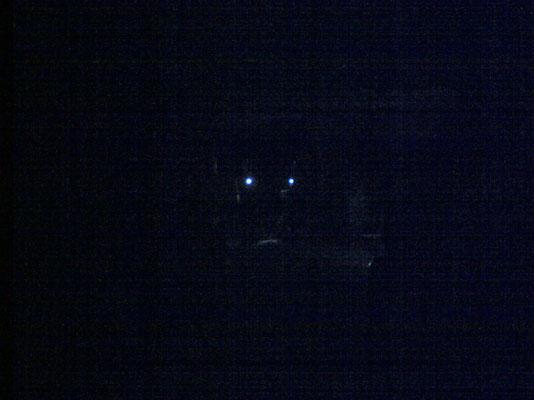 seuls dans le noir, les pompiers du GRIMP 33 veillent © C. Coulais