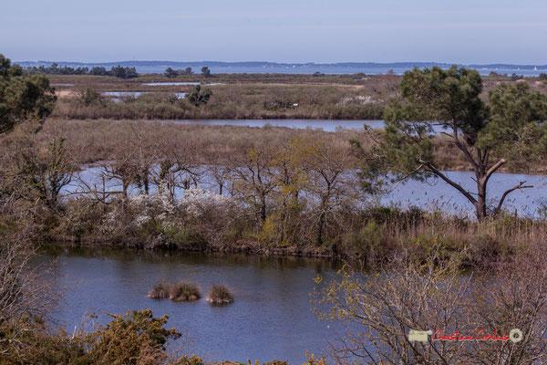Vue paysagère depuis l'observatoire 360° de la réserve ornithologique du Teich, samedi 16 mars 2019