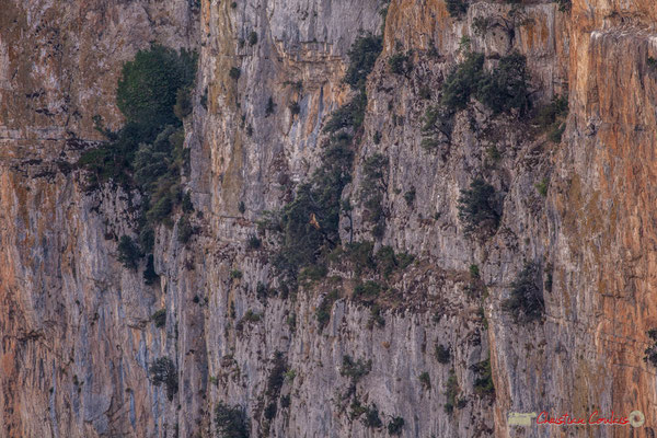2/2 Vol de vautour fauve le long de la falaise de la Foz de Arbaiun / Vuelo de buitre leonado a lo largo del acantilado de la Foz de Arbaiun, Navarra