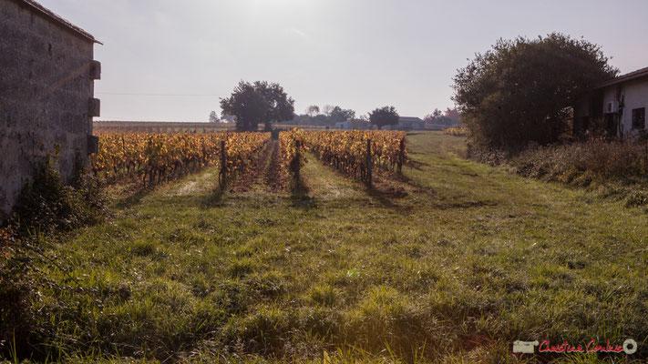 Vignoble et abri de vigneron. Avenue de Mons, Cénac, Gironde. 16/10/2017