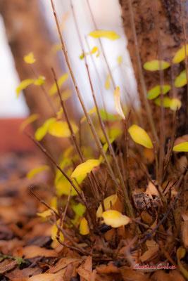 23 nuances de jaune. Bordeaux, samedi 5 décembre 2020. Photographie © Christian Coulais