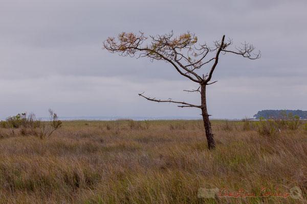 De Lège-Cap Ferret à Arès, par le sentier de la Réserve naturelle des Prés salés, Gironde, Aquitaine