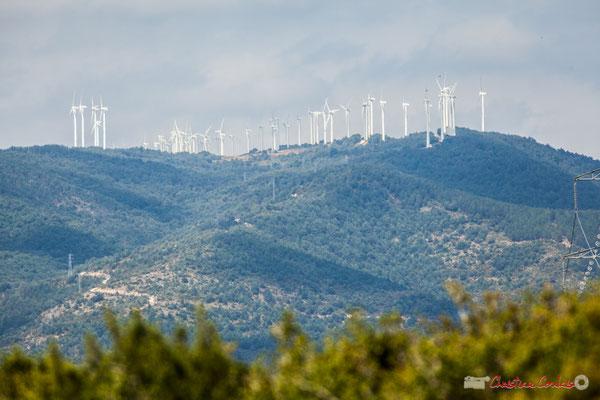 Végétation de garrigue et champ d'éoliennes / Foz de Lumbier / Navarra