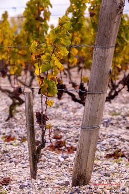 Croupe graveleuse; Vignoble du Château d'Yquem, Sauternes. Samedi 10 octobre 2020. Photographie © Christian Coulais